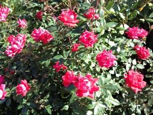 #3 Flowers in Boston