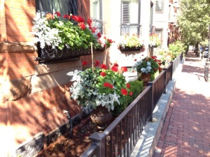 #4 Flowers in Boston