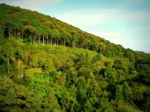 view from kiyomizu